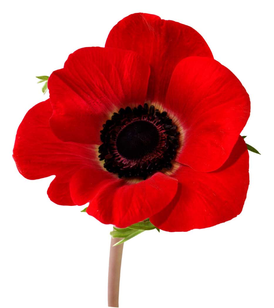 Two Remembrance Day(s) 2018 – Store hours
