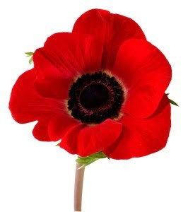 CLOSED Remembrance Day 2020 (Wed Nov 11)